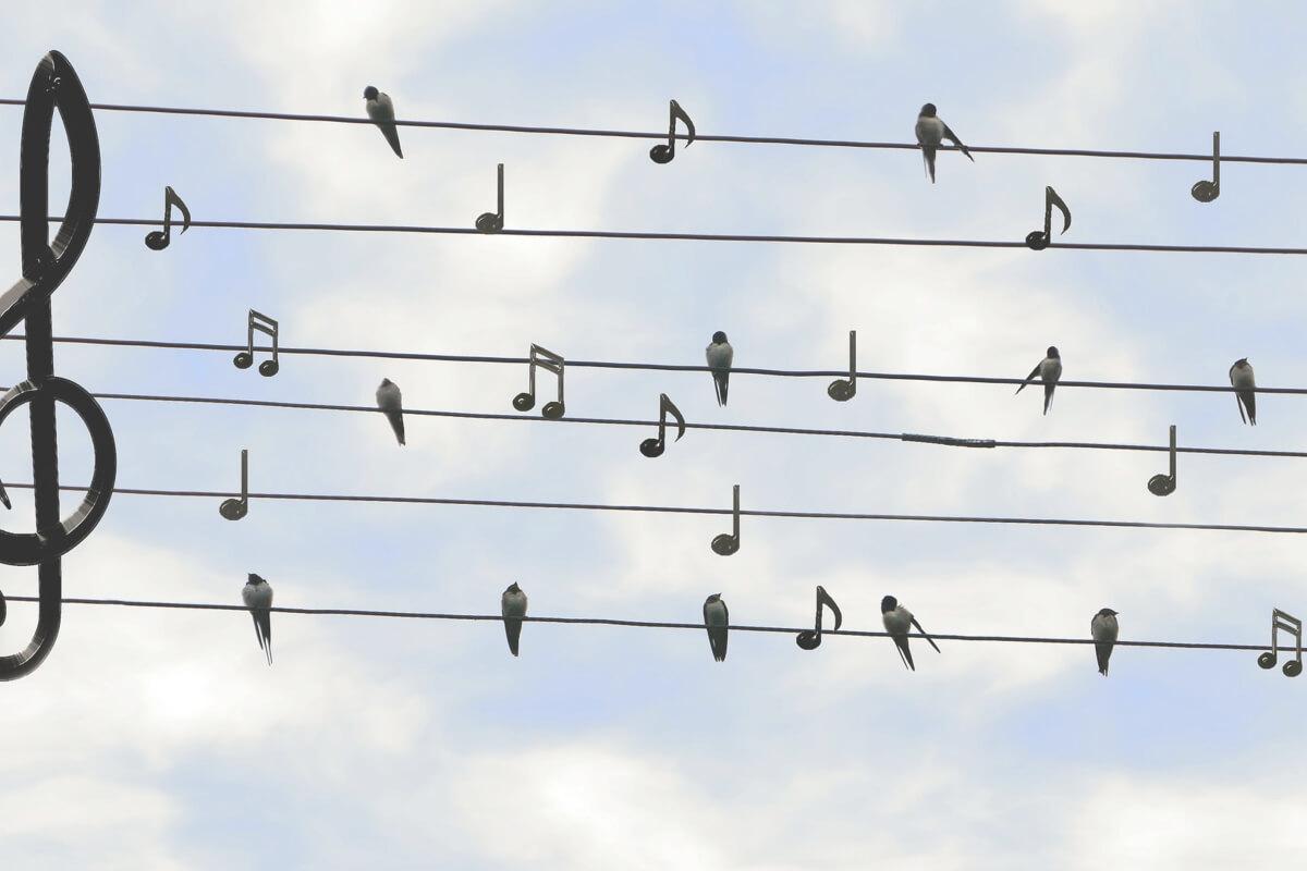 Band-Gesang, Jazz auf Ihrer Feier